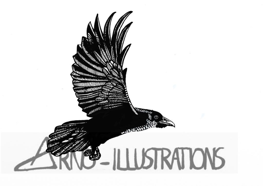 illustrations animaliere noir et blanc dessin encre corbeau corvus corax logiciel Artrage
